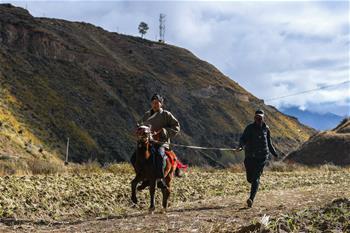 中 쓰촨성 간쯔현, 농촌활성화의 새로운 활로 개척